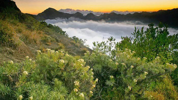 Alasan Kenapa Bunga Edelweis di Gunung Tidak Boleh Dipetik