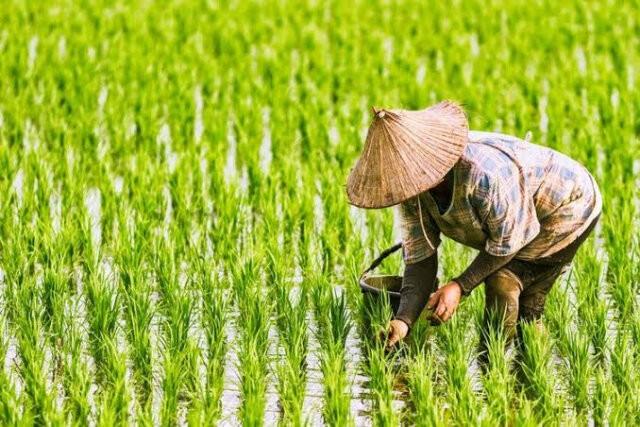 Oktober, NTP Riau Tertinggi di Sumatera